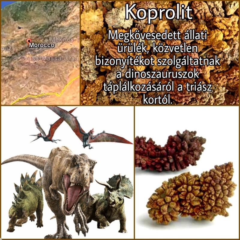 Koprolit, megkövesedett ürülék
