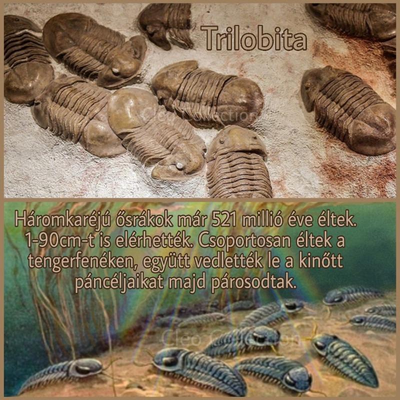 Trilobita, háromkaréjú ősrák