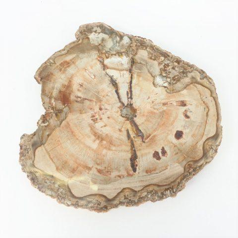 megkovesedett-fa-petrified-wood