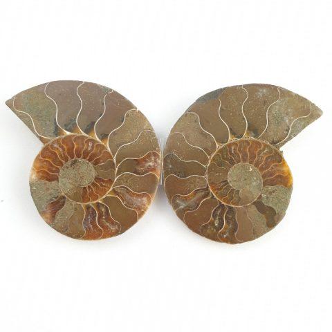 ammonitesz-fosszilia