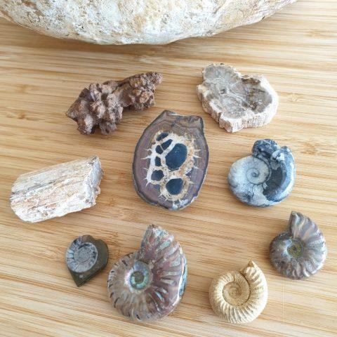 fosszilia-osmaradvany-disztargy