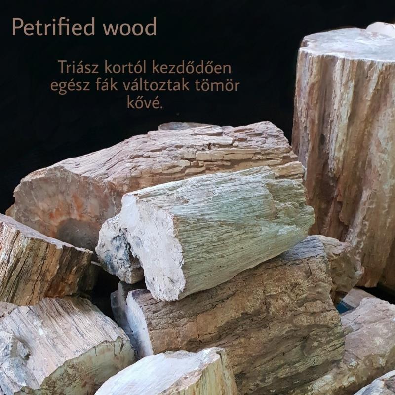 Petrified Wood, Megkövesedett fa